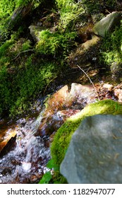 Green moss on rock in alpine stream, Mount Rainier National Park