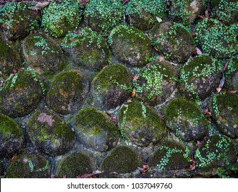 Green moss on the rock that are base of elavation path.