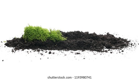 Green moss on soil, dirt pile, isolated on white background