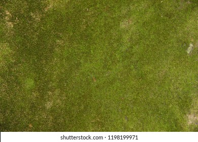 Green moss on stone texture and background