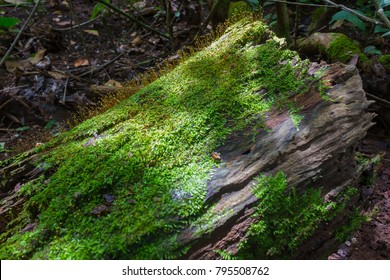 Green moss on stump tree in deep forest.
