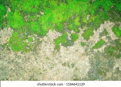 Green moss on the surface of a large rock., Green moss growing on concrete floors.