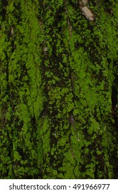 Green moss on a tree.