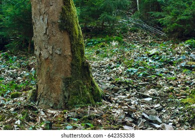 Green moss on tree and ground in the forest