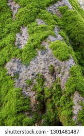Green moss on tree trunk 80 mega pixel picture