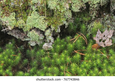 Green moss with pine needles