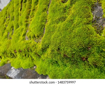 Green Moss plant green sphagnum mos Nature