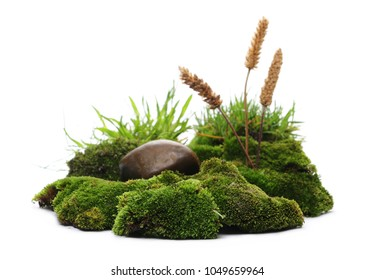 Green moss with reeds isolated on white background