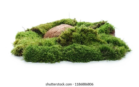 Green moss with rock isolated on white background