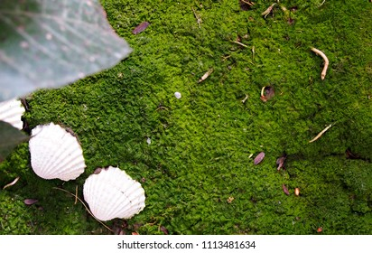 green moss and shell background