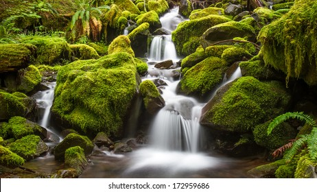 Green Moss stream in the rain forest of Olympic National Park, Washington