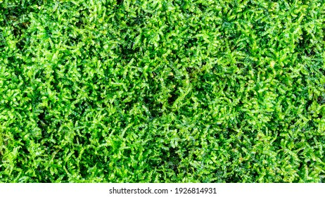 Green moss texture for background