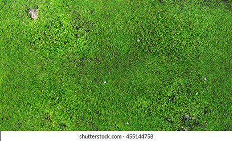 Green moss texture, background with copy space