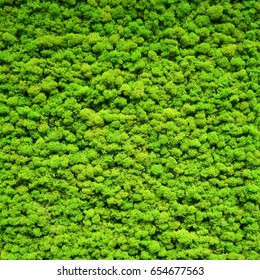 Green moss texture. Moss background for wall dell decoration.