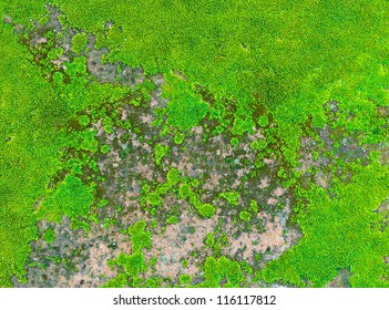 green moss texture top view