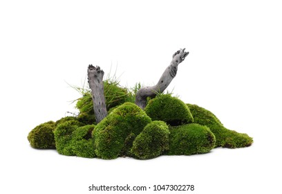 Green moss with twig isolated on white background
