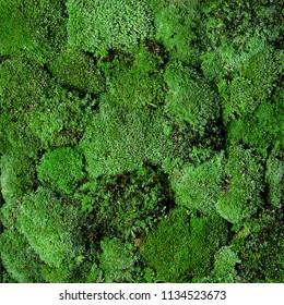 green moss wall