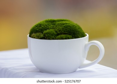 Green moss in white cup on colored background.