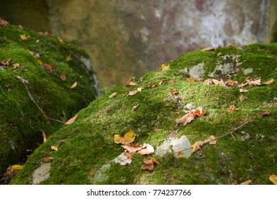 Green moss with yellow leaves on rocks and selective focus