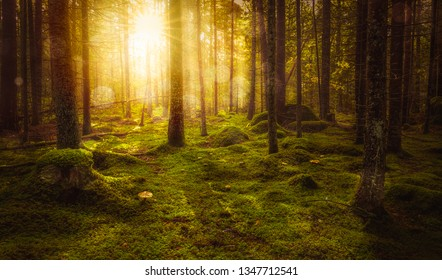 Green mossy fairytale forest with beautiful light from the sun shining between the trees in the mist. Mysterious cozy atmosphere.
