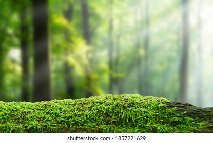 Green mossy log background for product display montages - Shutterstock ID 1857221629