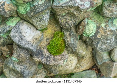 Green Mossy Old Stone Wall New England Padnaram Dartmouth Massachusetts. Stone walls were built in the early 1600s and 1700s in New England torop mark property lines.