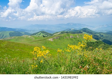 Green mountain, blue sky and yellow flowers