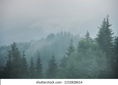 Green mountain forest in cloudy and rainy dark moody weather