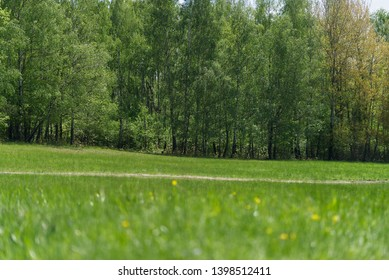 Green mountain meadow with the forest pathway and the birch grove in the background. Natural environment. - Shutterstock ID 1398512411
