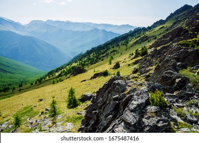 Green mountain scenery with vivid green mountainside with conifer forest and crags. Coniferous trees and rocks on big hillside. Scenic alpine landscape. Big stones on steep slope with rich vegetations