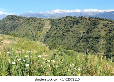 green mountains with daisies and snow