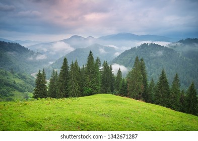 Green mountains hills . Fir and spurce forest.Composition of nature.