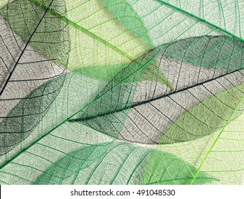 Green mulberry leaves skeletons for background