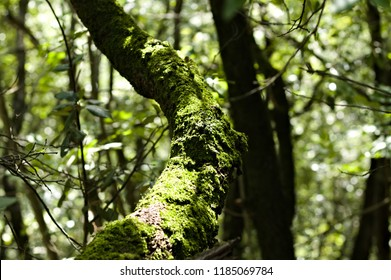 Green musk on the branches in the wood - Marche, Italy, Europe