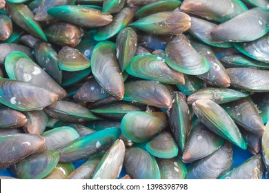 Green mussel background and texture