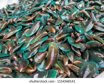 green mussel fresh