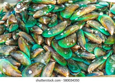 Green mussel (Mytilus trossulus) shells picked at beach,