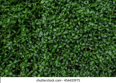 Green natural background of grass