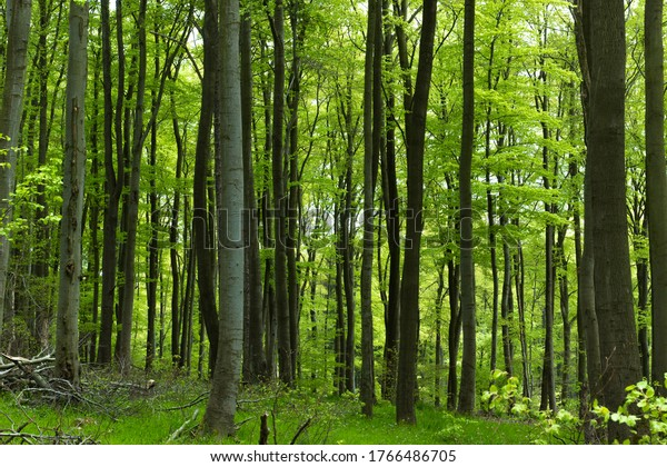 Green natural forest in the Harz National Park