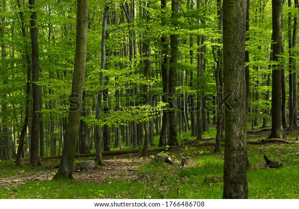 Green natural forest in the Harz National Park Germany