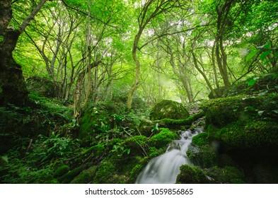 green natural forest river landscape