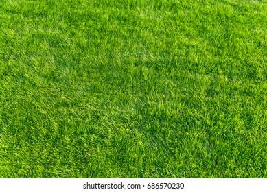 Green natural lawn
