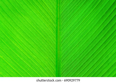 Green natural leaf texture and background