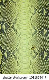 Green natural snakeskin. Background. Texture.