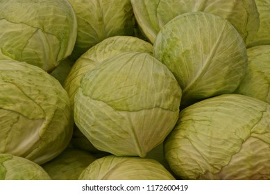 green natural vegetative texture from round heads of cabbage
