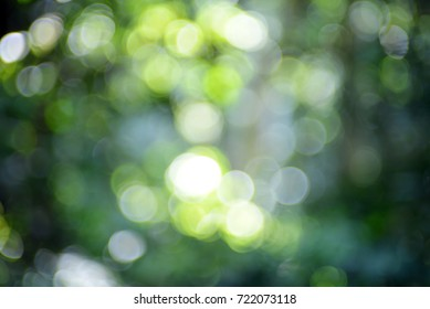green nature abstract background abstract nature green nature