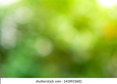 green nature background, abstract green bokeh