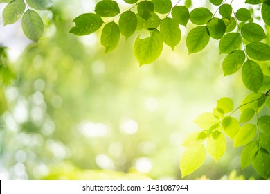 Royalty-Free Spring Nature Background Stock Images, Photos