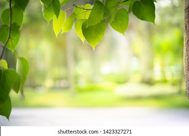Green nature background framing for product display