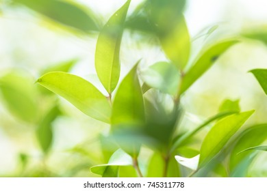 Green nature background with leaves for your design